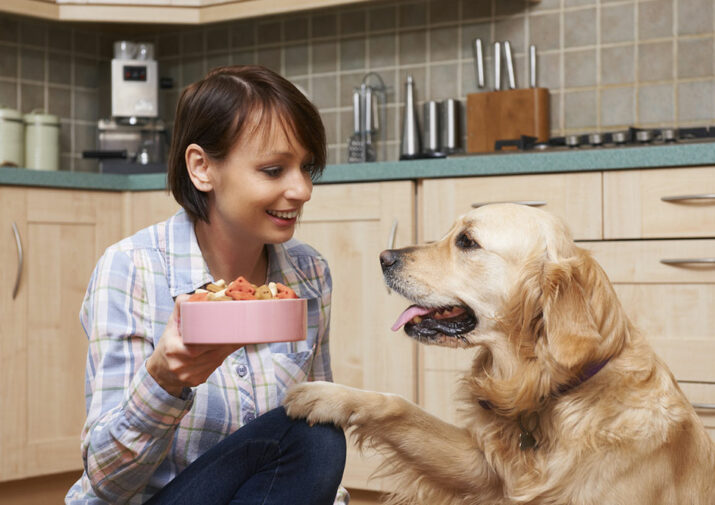 Here are the top 6 food allergies in cats and dogs
